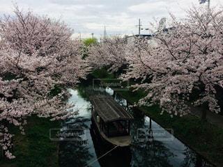 桜と船の写真・画像素材[1162831]