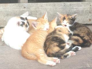 最高にかわいい猫団子の写真・画像素材[1163032]