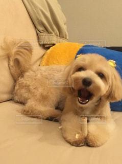 ベッドの上に横たわる犬 - No.1159902
