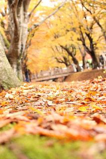 秋の紅葉の写真・画像素材[1160998]