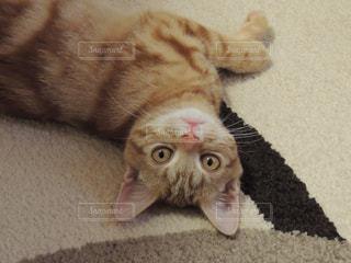 地面に横になっている猫の写真・画像素材[1161115]