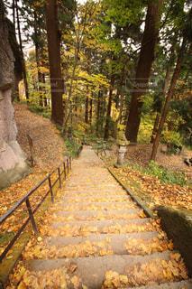 秋の山寺の写真・画像素材[1161198]