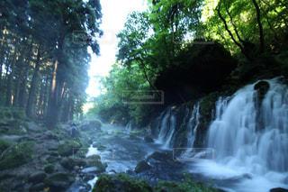 森の中の大きな滝の写真・画像素材[1161203]
