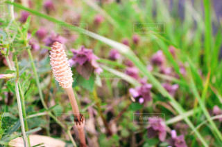 庭の植物の写真・画像素材[1170315]