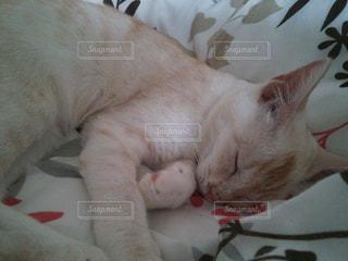 ベッドの上で眠っている猫の写真・画像素材[1170318]