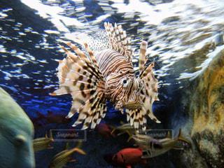 水の動物の写真・画像素材[1175224]