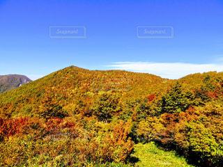 背景の山の茂みのグループの写真・画像素材[1187355]