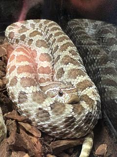 近くに蛇のアップの写真・画像素材[1293093]