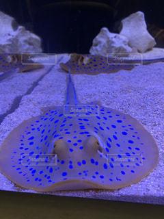 近くに魚のアップの写真・画像素材[1293095]