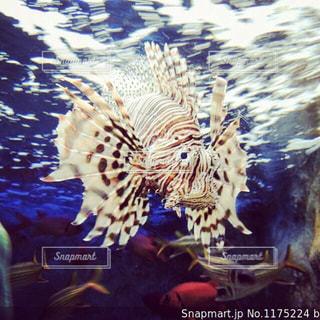水の上の動物の写真・画像素材[2319326]