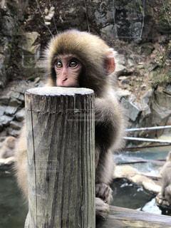 木の表面に座っている猿の写真・画像素材[2815421]