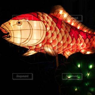 金魚のランタン - No.1160478