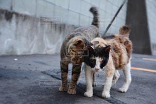 歩道の上を歩く猫の写真・画像素材[1160229]