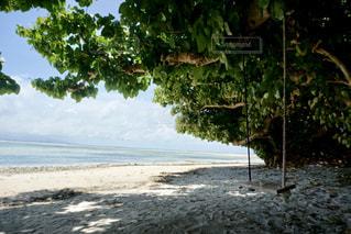 カイジ浜のブランコ✨の写真・画像素材[2266984]