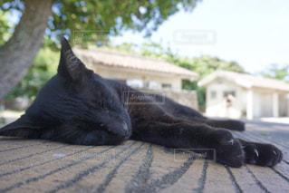 お昼寝中の黒猫さん🐱💤の写真・画像素材[2270535]