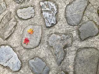 秋の始まり🍁の写真・画像素材[2480085]