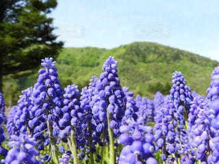 植物の紫色の花の写真・画像素材[1182163]