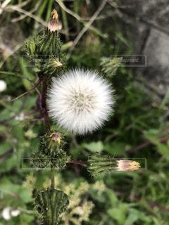 雑草の写真・画像素材[2039832]