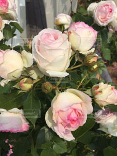 テーブルの上の花瓶に花束をの写真・画像素材[2277647]