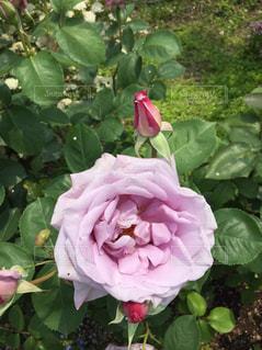 花のクローズアップの写真・画像素材[2277652]