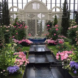 庭のピンクの花でいっぱいの写真・画像素材[2277658]