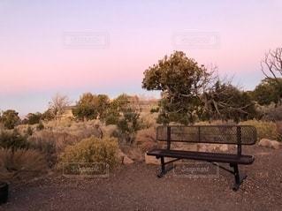 木の隣にある空の公園のベンチの写真・画像素材[2703032]