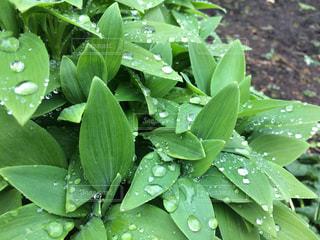 雨上がりのの写真・画像素材[1160766]