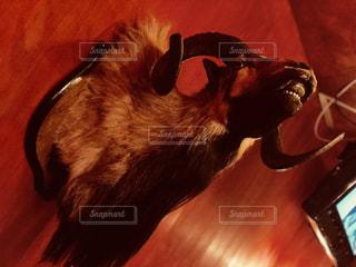 動物の写真・画像素材[1161427]