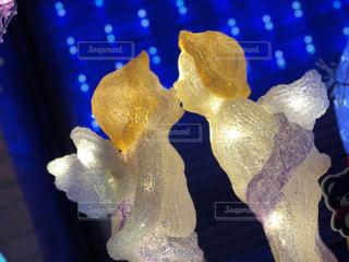 天使のキスの写真・画像素材[1161452]