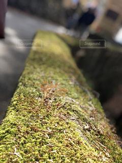 苔の写真・画像素材[1162136]