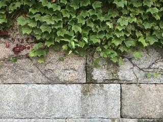 石の壁とツタ3の写真・画像素材[1275122]