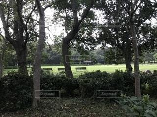 公園の木の写真・画像素材[2384990]