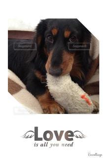 ベッドの上に横たわる犬の写真・画像素材[1166478]