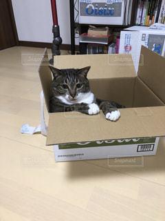 箱の上に横たわる猫の写真・画像素材[1176085]