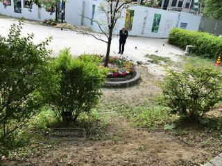 庭の人 - No.1162245