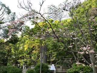 大きな木 - No.1162246