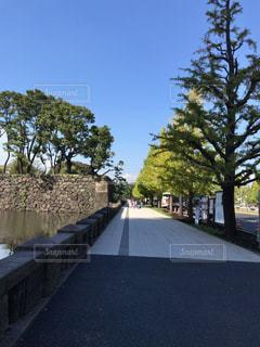 歩道でツリー - No.1162272