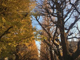 フォレスト内のツリー - No.1162277