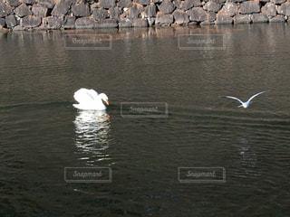 水の体の横に立っているカモメの群れ - No.1162282