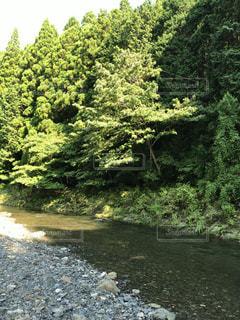 フォレスト内のツリー - No.1162324