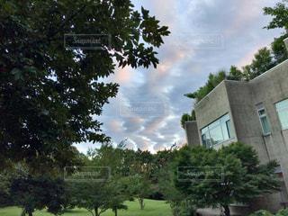 建物の前に大きな木 - No.1162329