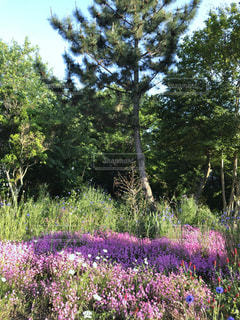 近くのフラワー ガーデン - No.1165576