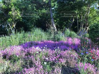 大きな紫色の花は、庭 - No.1165577