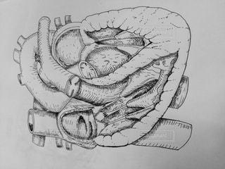 心臓ペン画イラスト モノクロの写真・画像素材[1163934]
