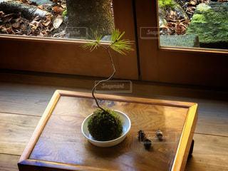 木製テーブルの上に座っている松の苔盆栽の写真・画像素材[1775278]