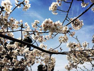 木の枝にとまった鳥の写真・画像素材[1162876]