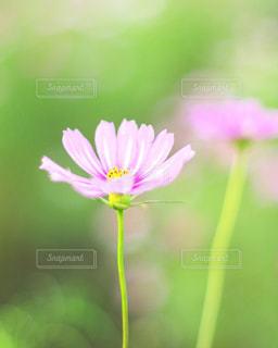 近くの花のアップの写真・画像素材[1528917]
