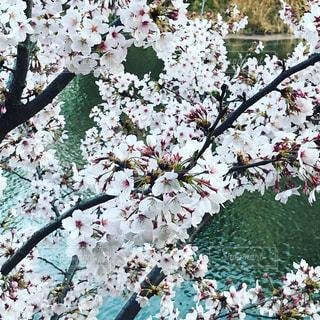 春の訪れの写真・画像素材[1163444]