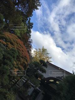 見上げた空の写真・画像素材[1805707]