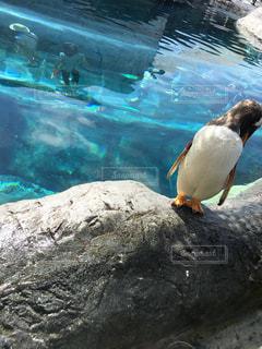 プールの水で岩の上に座っている鳥の写真・画像素材[1164872]